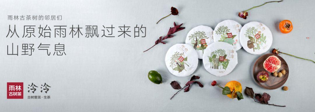 雨林古树茶|包装于品牌崛起之路的助攻